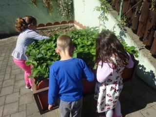 Naš mali eko vrt